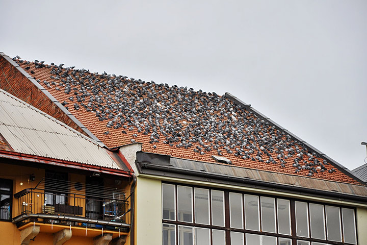 A2B Pest Control are able to install spikes to deter birds from roofs in Wembley.
