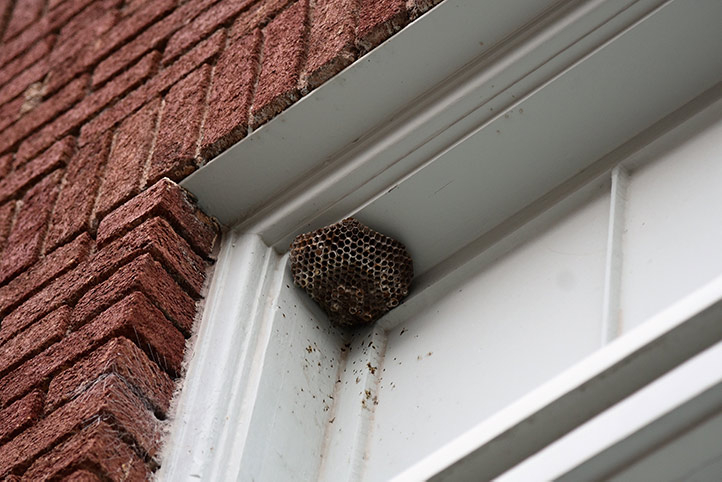 We provide a wasp nest removal service for domestic and commercial properties in Wembley.